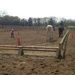 馬の近況報告ーロマン
