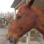 馬の近況報告ーキミマロ編