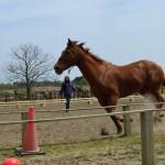 キミマロ…リード無しで引き馬