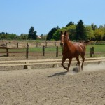 「秋のJAFカルチャー」で乗馬体験