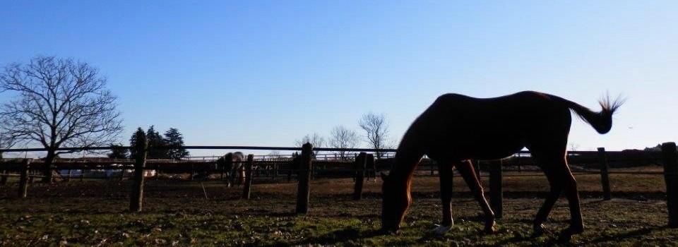 西船橋・佐倉から送迎で通える千葉県富里市の乗馬クラブ|ファーム・クラインガルテン