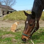 経済動物の生きる道