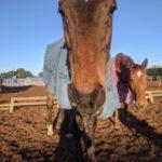 乗馬クラブを貸し切って、馬と遊ぼう!