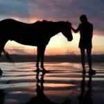 もし自分の馬がいたら、どんなことがしたい?